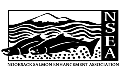 Nooksack Salmon Enhancement Association (NSEA)