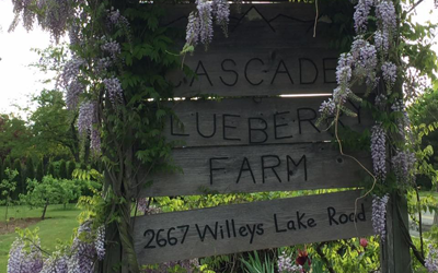 Cascade Blueberry Farm