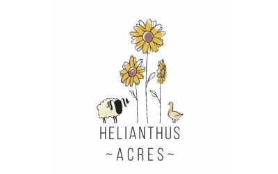Helianthus Acres