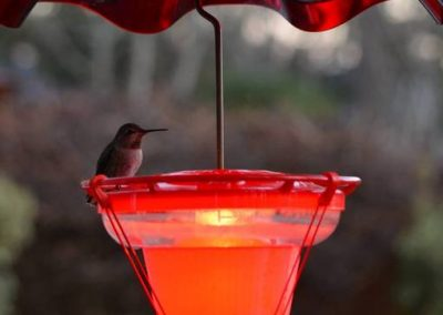 A heated hummingbird feeder from Wild Bird Chalet