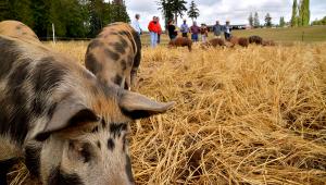 Alluvial Farms Whatcom Farm Tour Header