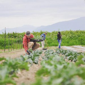 Farming-at-Viva-Farms