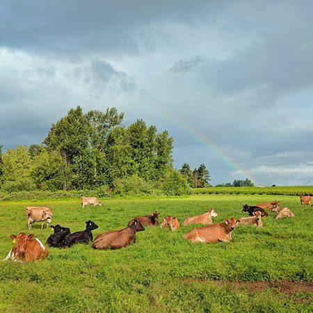 Grace Harbor Farms Herd