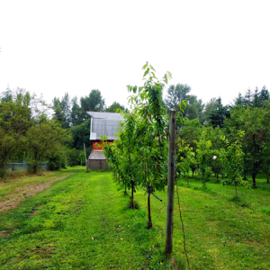 Haucks Orchard