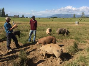 Learning about pigs at Alluvial Farm