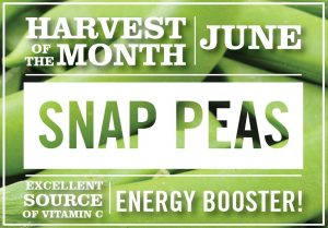 Harvest of the Month June Snap Peas