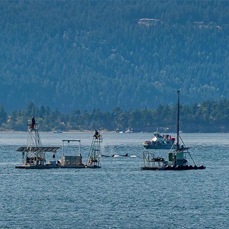 Lummi Island Wild Boats