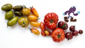 Squatch Food Waste Homepage-Slider