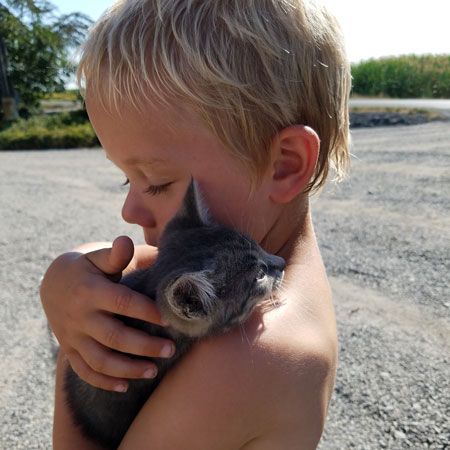 Kittens and kids on the farm