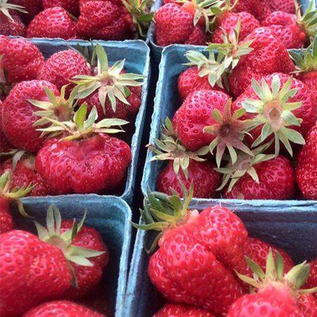 Twin-Cedars-Organic-Strawberries