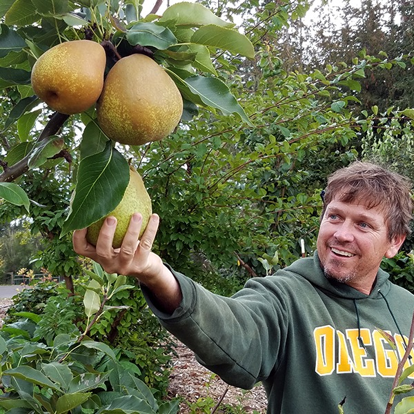 Wild acres Farms Pears