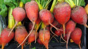 Harvest of the Month Header