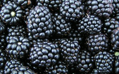 Nearly 5,000 Lbs of Berries Recovered