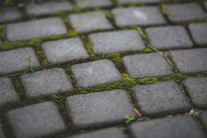Home and Landscape Tour brick path