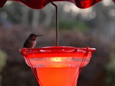 A hummingbird sits on a hummingbird feeder and heater from Wild Bird Chalet.